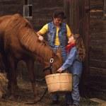 Feeding The Horse — Stock Photo #31795899