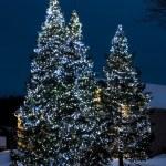 Christmas Lights On Outside Trees — Stock Photo #31797137
