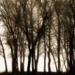 Silhouetted Trees — Stock Photo
