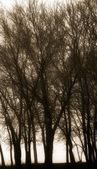 Silhouette Of Trees — Stock Photo