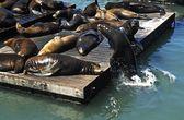 Seals On Pier 39, San Francisco, Usa — Stock Photo