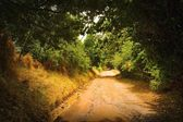 A Dirt Road — Stock Photo