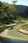 Eureka, California, USA. River Running Though A Forest — Stock Photo