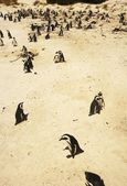 Penguins On A Beach — Stock Photo