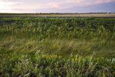 The Prairies, Manitoba, Canada — Stock Photo