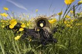 Scarecrow In A Field Of Buttercups — Stock Photo