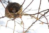 Birds Nest — Stock Photo