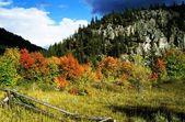 Grand Teton, Wyoming, USA. Autumn Trees Beneath A Mountain — Stock Photo