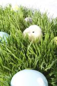 Colored Eggs And A Baby Chick In The Grass — Stock Photo