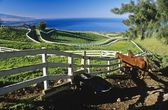 Horses Behind Wooden Fence, Hawaii, Usa — Stock Photo