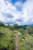 New Mexico, USA. Hiking Trail In The Gila Mountains — Stock Photo
