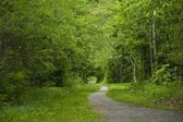 Tree Lined Path — Stock Photo