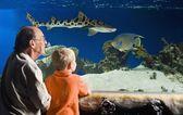Grootvader en kleinzoon kijken vis in het aquarium — Stockfoto