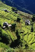 Terraced Fields, Annapurna Region, Nepal — Stock Photo