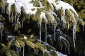 Snowy Branches Of Evergreen Tree — Stock Photo