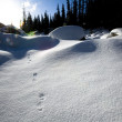 Animal Tracks In The Snow — Stock Photo #31800633