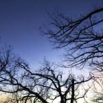 Tree Branches — Stock Photo