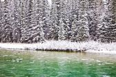 A Tree-Lined River In The Winter, Canmore, Alberta, Canada — Stock Photo