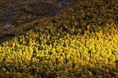 Forest In Fall, Gros Morne National Park, Newfoundland, Canada — Stock Photo