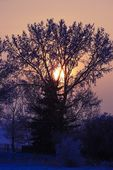 Sunrise Through A Tree In Winter — Foto Stock