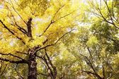 Trees With Yellow And Green Leaves — Stock Photo