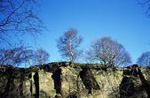Derbyshire, England, United Kingdom. Trees Atop A Cliff — Stock Photo