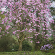 Tree Blooming — Stockfoto