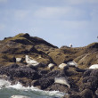 Stock Photo: Seals Basking On Shoreline