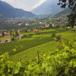 View Of A City In The Valley Near Merano And Terraced Vineyards. — Stock Photo