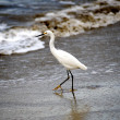 Crane On The Beach — Stock Photo