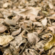 Dry, Brown Leaves On The Ground — Stock Photo