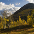 Aspen Trees And Mountains In Autumn In White River National Forest — Foto Stock