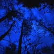 Stock Photo: Canopy Of Trees At Night