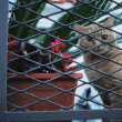 Cat Peeking Through Fence — Stock Photo #31935469
