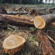 Stock Photo: Cut Logs In Logging Area