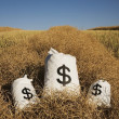 Bags Of Money On A Farm Field — Foto Stock