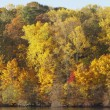 Stock Photo: Trees Along Shoreline In Autumn