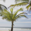 Palm Tree On The Beach — Stok fotoğraf