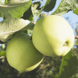 Stock Photo: Apples On Tree