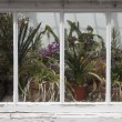 Window With Plants — Stock Photo