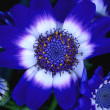 Closeup Of Blue Flower — Stock Photo