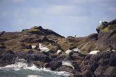 Seals Basking On Shoreline — Stock Photo