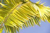 Palm Branch, Maui, Hawaii, Usa — Stock Photo
