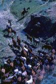 Koně pasoucí se v noci — Stock fotografie