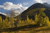 Aspen Trees And Mountains In Autumn In White River National Forest — Stock Photo