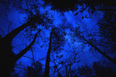 Canopy Of Trees At Night — Stock Photo