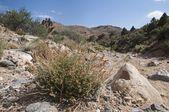 Canyon Scene In The Mojave Desert National Preserve. — Stock Photo