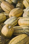 Close-up Gourds — Stock Photo