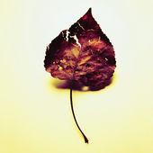 сушеные листья — Стоковое фото