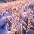 Frost On Leaves — 图库照片 #31940439